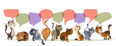 Chatting Kittens Composition Royalty Free Stock Photos