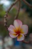 Chatuchak-Park-Blume Lizenzfreie Stockfotos