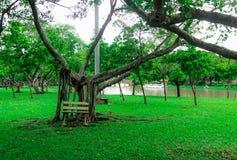 Chatuchak park jest parkiem w sercu Tajlandzki kapitał, lokalizować w Bangkok Zdjęcia Royalty Free