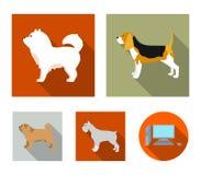 Chau chau, levawa, schnauzer, pug.Dog breeds set collection icons in flat style vector symbol stock illustration web. Chau chau, levawa, schnauzer, pug.Dog Stock Photo