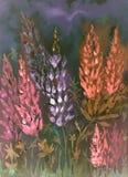 Chauffez l'impression nocturne des lupines rouges et pourpres d'un bas point de vue Photo libre de droits