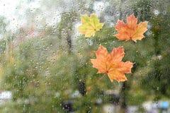 Chauffez le regard la fenêtre pour l'automne Photos libres de droits