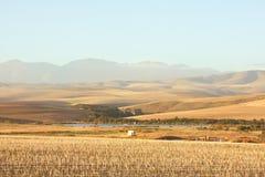 Chaume-champ de maïs dans l'horizontal de roulement photos libres de droits