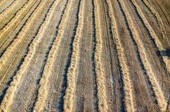 Chaume de blé Image libre de droits