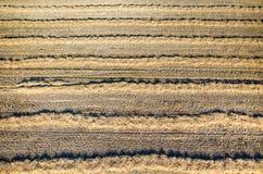 Chaume de blé Images stock