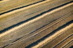 Chaume de blé Photos stock