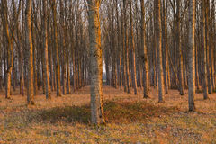 Chaumont trees Royalty Free Stock Photography