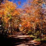 Chaussée scénique - réserve forestière supérieure Photos libres de droits