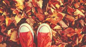 Chausse les chaussures rouges dans des feuilles d'automne Photos libres de droits