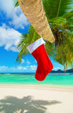 Chaussette rouge de Noël sur le palmier à la plage tropicale d'océan Images libres de droits