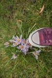 Chaussure au-dessus de la belle protection de la nature de concept de fleur de crocus Photographie stock