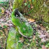 Chaussure couverte de la mousse verte Concepts : Camouflez et la reconquête de la nature vers l'homme et ses choses Photographie stock libre de droits