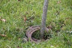 Chaussure de cheval de Trowing à un poteau photographie stock