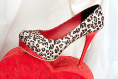 Chaussure de femme image stock