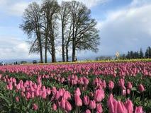 Chaussure en bois Tulip Festival photos libres de droits