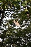 Chaussure en soie dans un arbre images libres de droits