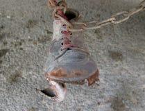 Chaussure sur le réseau Photo libre de droits