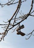 Chaussures accrochées d'un arbre Photos stock