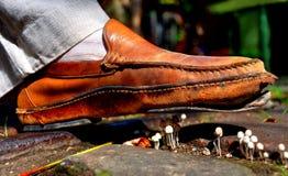 Chaussures au-dessus des champignons Photos libres de droits