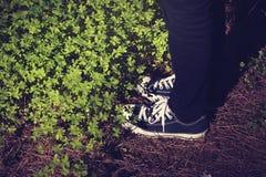 Chaussures d'espadrilles au-dessus des aiguilles de pin et de trèfle Photo stock