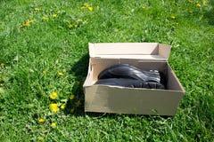Chaussures dans la boîte Images libres de droits