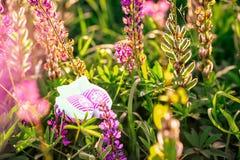 Chaussures de bébé nouveau-nées roses de filles dans l'herbe verte avec les fleurs violettes - concept d'amour Concept de grosses photos libres de droits