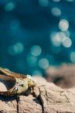 Chaussures de mariage sur les roches par la mer Images libres de droits