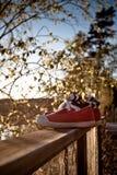 chaussures de pêche à la traîne Photographie stock libre de droits