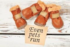 Chaussures du ` s de chien sur le contexte en bois Photographie stock libre de droits