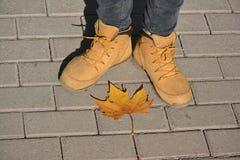 Chaussures et feuille d'automne Images libres de droits