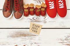 Chaussures pour des chiens et des humains Image libre de droits