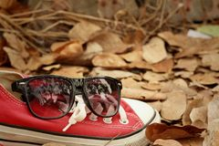 Chaussures rouges avec des lunettes de soleil sur le fond brun de feuilles Photo libre de droits