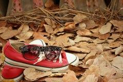 Chaussures rouges avec des lunettes de soleil sur le fond brun de feuilles Photographie stock libre de droits