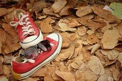 Chaussures rouges avec des lunettes de soleil sur le fond brun de feuilles Image stock