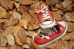 Chaussures rouges avec des lunettes de soleil sur le fond brun de feuilles Photos libres de droits