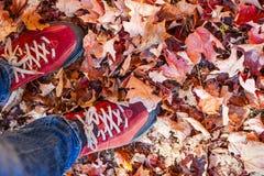 Chaussures rouges se tenant parmi des feuilles de chute Images stock