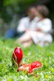 Chaussures rouges sur l'herbe avec les personnes à l'arrière-plan Image libre de droits