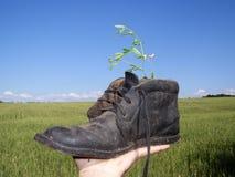 Chaussures sur la main Photo libre de droits