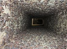 Chauve-souris coupée la queue par souris - colonie Photographie stock libre de droits