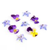 Chave alta imagem filtrada de flores comestíveis Foto de Stock Royalty Free