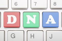 Chave colorida do ADN no teclado Fotografia de Stock Royalty Free