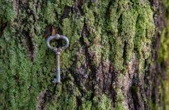 A chave da chave do ferro do vintage encontra-se em um musgo em uma textura da casca de árvore Imagem de Stock