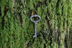 a chave do vintage encontra-se em um musgo verde na casca Imagem de Stock Royalty Free