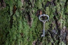 A chave do vintage encontra-se em um tapete na casca Fotos de Stock Royalty Free