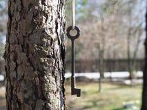 A chave na floresta em um ramo de ?rvore ? uma combina??o universal de funcionalidade e de eleg?ncia fotos de stock