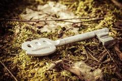 Chave no musgo Imagem de Stock