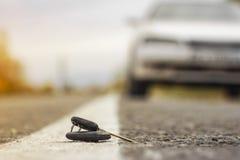 Chaves perdidas do carro nas agulhas caídas do abeto vermelho azul bokeh traseiro do fundo do borrão fotografia de stock