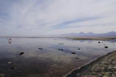 Chaxa озера в altiplano в chile пустыни atakama стоковое фото