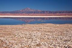 chaxa Чили laguna Стоковое Изображение