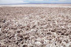 Chaxa Lagoon in the Salar de Atacama, Chile Royalty Free Stock Photos